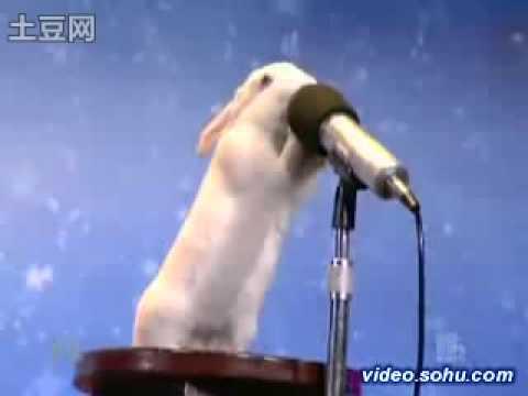 美国达人秀 - 人兔双簧 (超神的兔子)