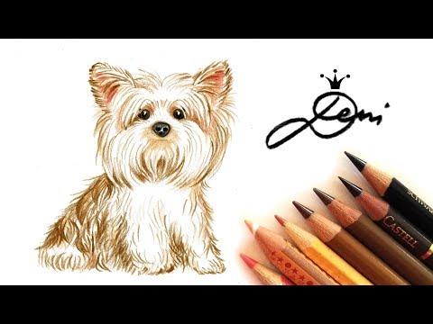 Hündchen Yorkshire Terrier zeichnen #speeddrawing 🐶 Dog Drawing 🐕 Pисунка на йоркшир териер куче?
