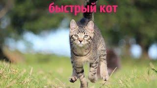 Быстрый кот)