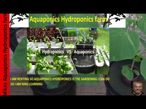 How To Build an Aquaponic diy strawberry barrel