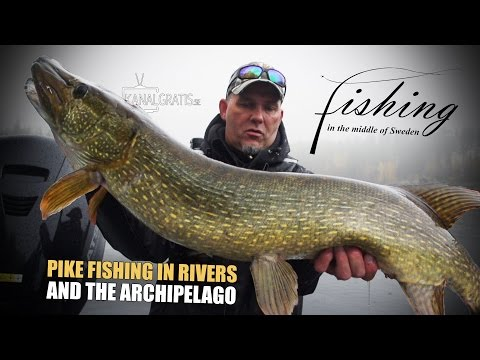 Fishing in the Middle of Sweden - Pike Fishing in Rivers and the Archipelago | Kanalgratis.se