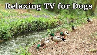 Relax Your Dog TV  8 Hours of Relaxing TV for Dogs  at The Babbling Brook ✅