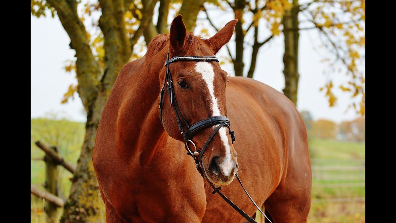 Звуки скачущих лошадей скачать бесплатно