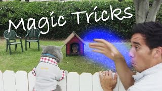 TOP SATISFYING ZACH KING MAGIC TRICKS VINES 2018 FUNNY Zach King COLLECTION MAGIC TRICKS VINE VIDEO
