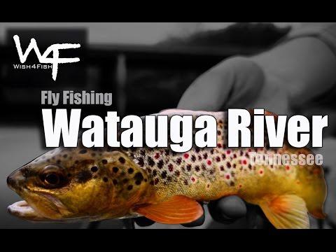 "W4F - Fly Fishing Tennessee ""Watauga River"""