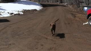 Riley, my 6 year old Chesapeake only knows how to play 'fetch' with...