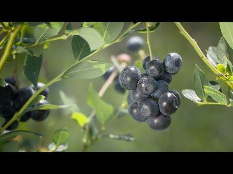 2017 Agricultural Environmental Award :: Florida Blue Farms