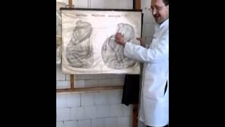 Операции на желудке(, 2014-05-11T15:37:32.000Z)