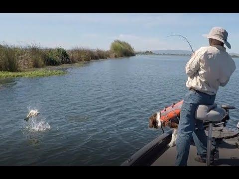 Delta Bass Fishing April 2019