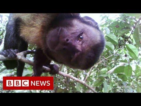 Amazon Deforestation - BBC News