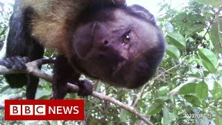 Amazon Deforestation - BBC News