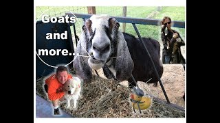 Goats, Goats, and More  ~ A week at the Goat Farm 🐐