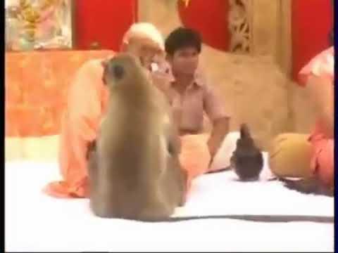 Shri Hanuman Ji Visits During Ramkatha And Doing Bajan And Gave Blessing To Devotees. Jai Hanuman