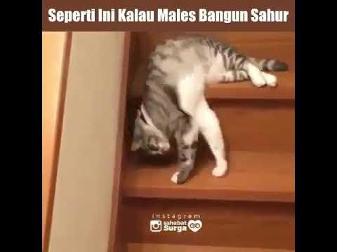 Kucing malas bangun sahur