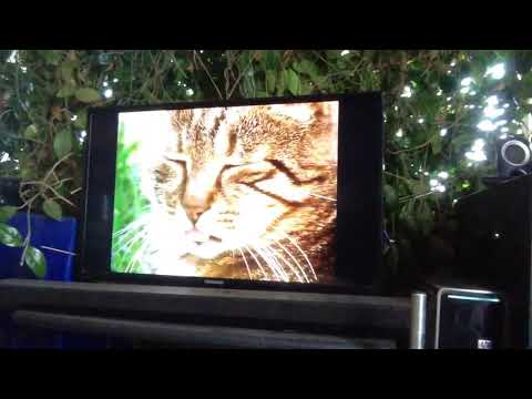 Wolf Dog Watches Cat Documentary