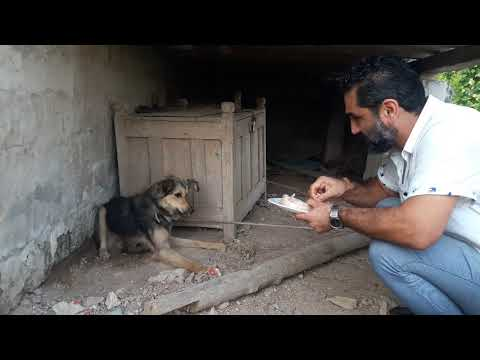Rescuing an innocent dog who's been stuck with a rope around his tommy since he was a puppy طناب کمر