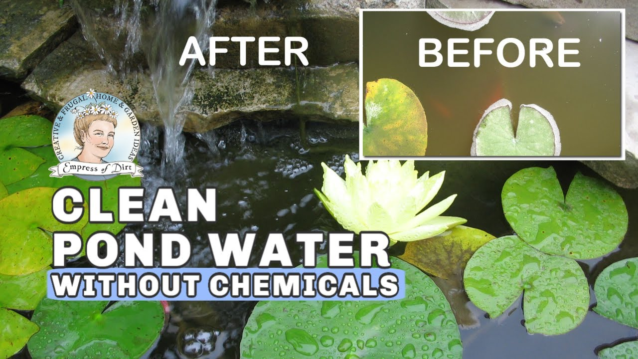 How To Clean Murky Pond Water Without Chemicals Full