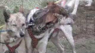 Sled Dog Training ~ Fall 09