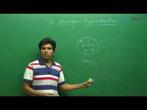 NEET I Biology I Human Reproduction I M. Asad Qureshi Sir From ETOOSINDIA.COM thumbnail