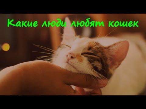 ПОЧЕМУ ЛЮДИ ЛЮБЯТ КОШЕК WHY PEOPLE LOVE CATS