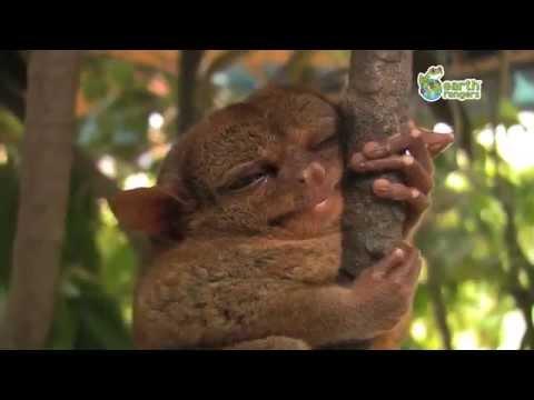 Những tình huống đáng yêu nhất của động vật hoang dã