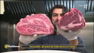 Incroyable : du boeuf de Kobe élevé en France ! - La Quotidienne