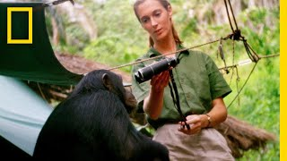 Sneak Peek - JANE   National Geographic