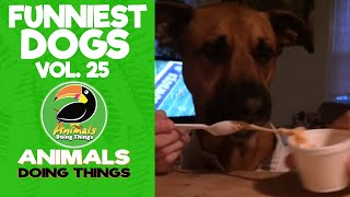 🐶 Try Not To Laugh Funniest Dogs Vol. 25 | Animals Doing Things