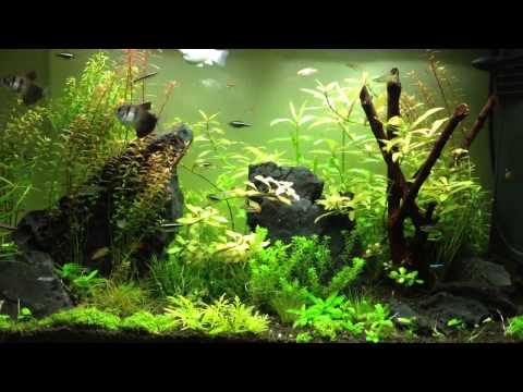 My planted aquarium Qatar