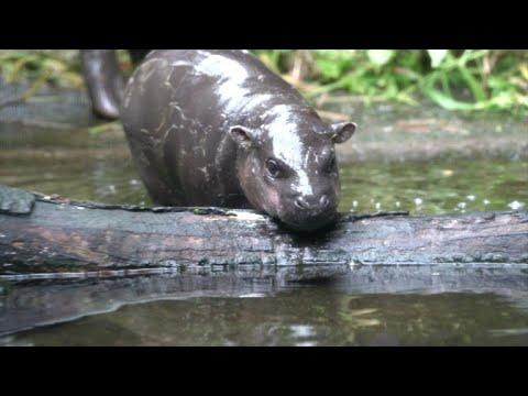 Singapore zoo's baby animals