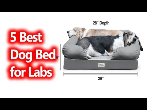 best-dog-bed-for-labs-buy-in-2019