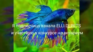 Конкурс на аквариум на канале ELLI DI PETS \ Короче говоря , хочу рыбку
