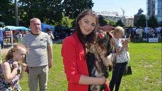 9  Выставка собак, Харьков, Стадион Пионер, май 2019, КСУ International dog show, слайд шоу