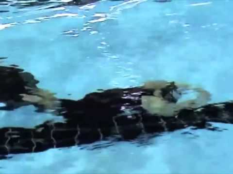 Shallow water blackout lap swimmer youtube for Loss of motor control