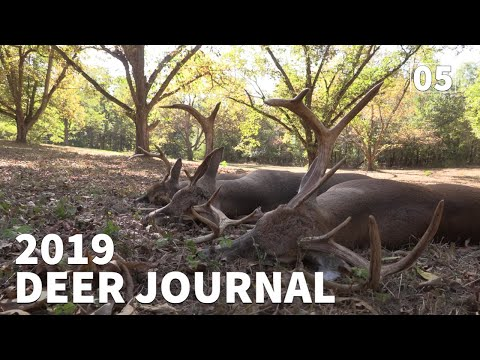 2019 Hunting A SOUTH GEORGIA 8 POINT - 2019 Deer Journal | Ep. #5 | OnX Hunt App