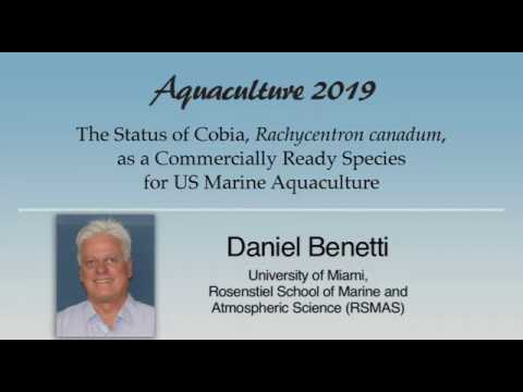 Daniel Benetti: Cobia, Rachycentron Canadum, Aquaculture