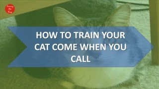 Training Cat To Come When You Call