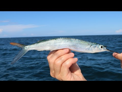 The SECRET! Bait and Tackle Shops WONT Teach You!! -How to Catch Ballyhoo (Tackle Tuesday)