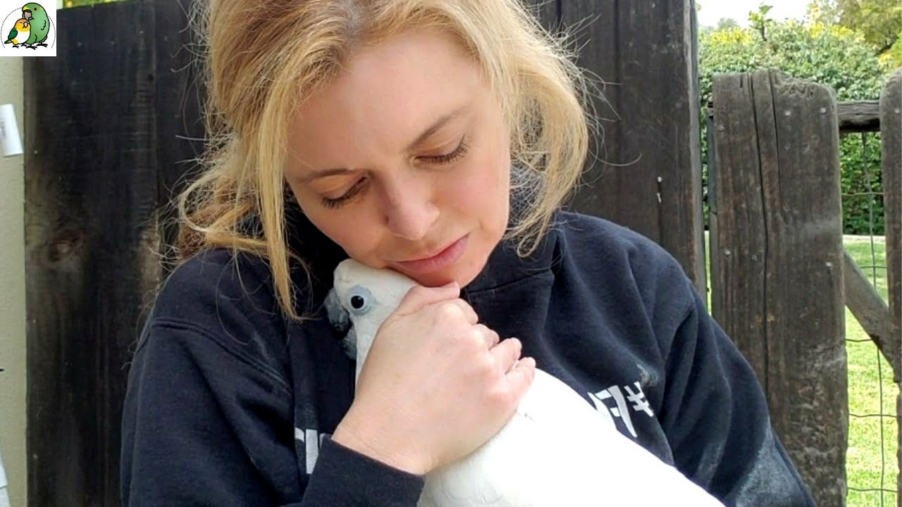 Rescued Tortured Cockatoo Romeo's Life Now | Parrot Update