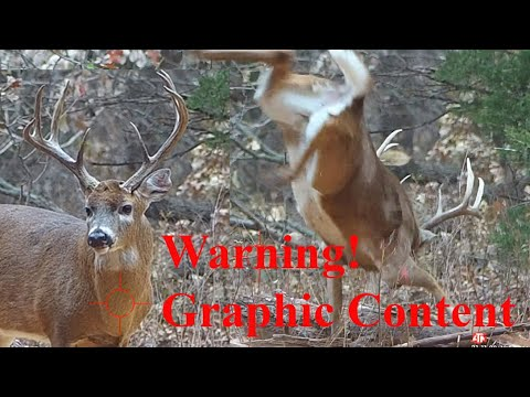 """White Tailed Deer 
