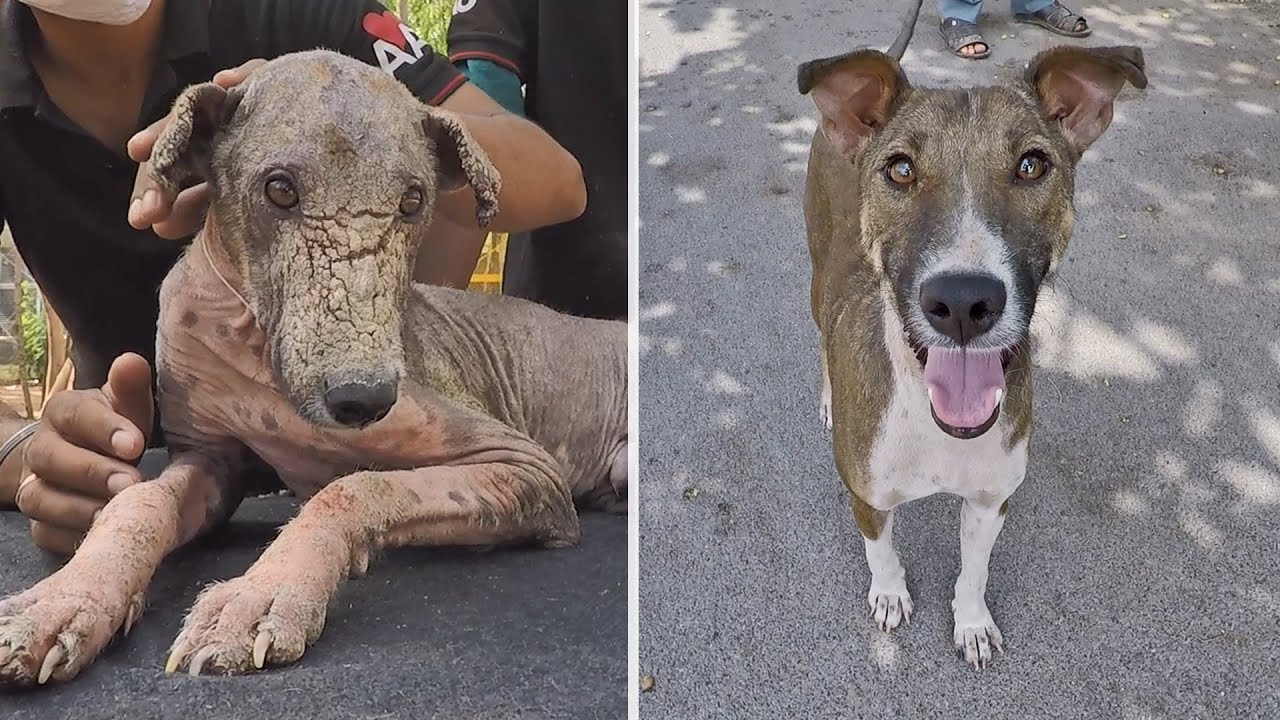 Mange almost took his life, but what a happy boy now!
