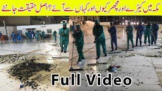Makkah Insects Video | Azab In Saudi Arabia | Khana Kaba | Latest News | Saudi Arabia Insects