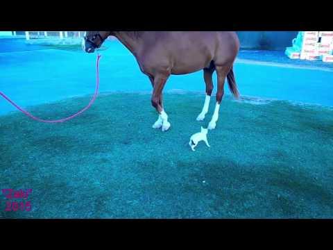 Horses: Cat Attack