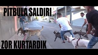 WE SAVED PITBULL AT THE LAST MINUTE FROM THE STRAY DOGS ATTACK PITBULL!!