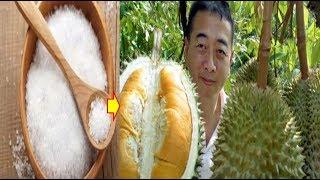Video INILAH Manfaat Garam Dapur Untuk Tanaman Durian, Agar Tumbuh Subur Dan Berbuah Lebat download MP3, 3GP, MP4, WEBM, AVI, FLV November 2018