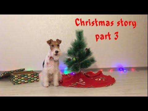 The Wire Fox Terrier Taffy / Dog's Christmas / Dog Tricks / Рождественская История Тэффи