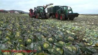 Cabbage Harvester,