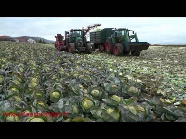Cabbage Harvester,