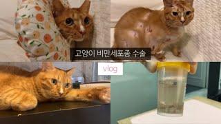고양이 원발성 비만세포종 수술 후기 _ 데이빗이 많이 …