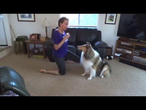 Teach Shake Hands, collie, Dog, dog tricks, training